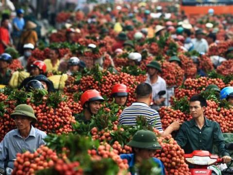 Thông tin cần biết cho doanh nghiệp xuất khẩu quả vải sang Trung Quốc năm 2019